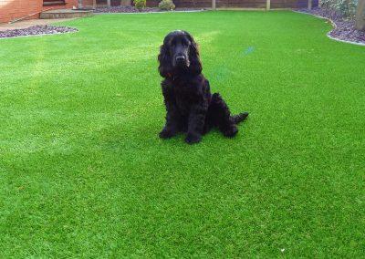 artificial-grass-4